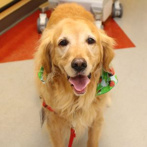 pet therapy dog rosie