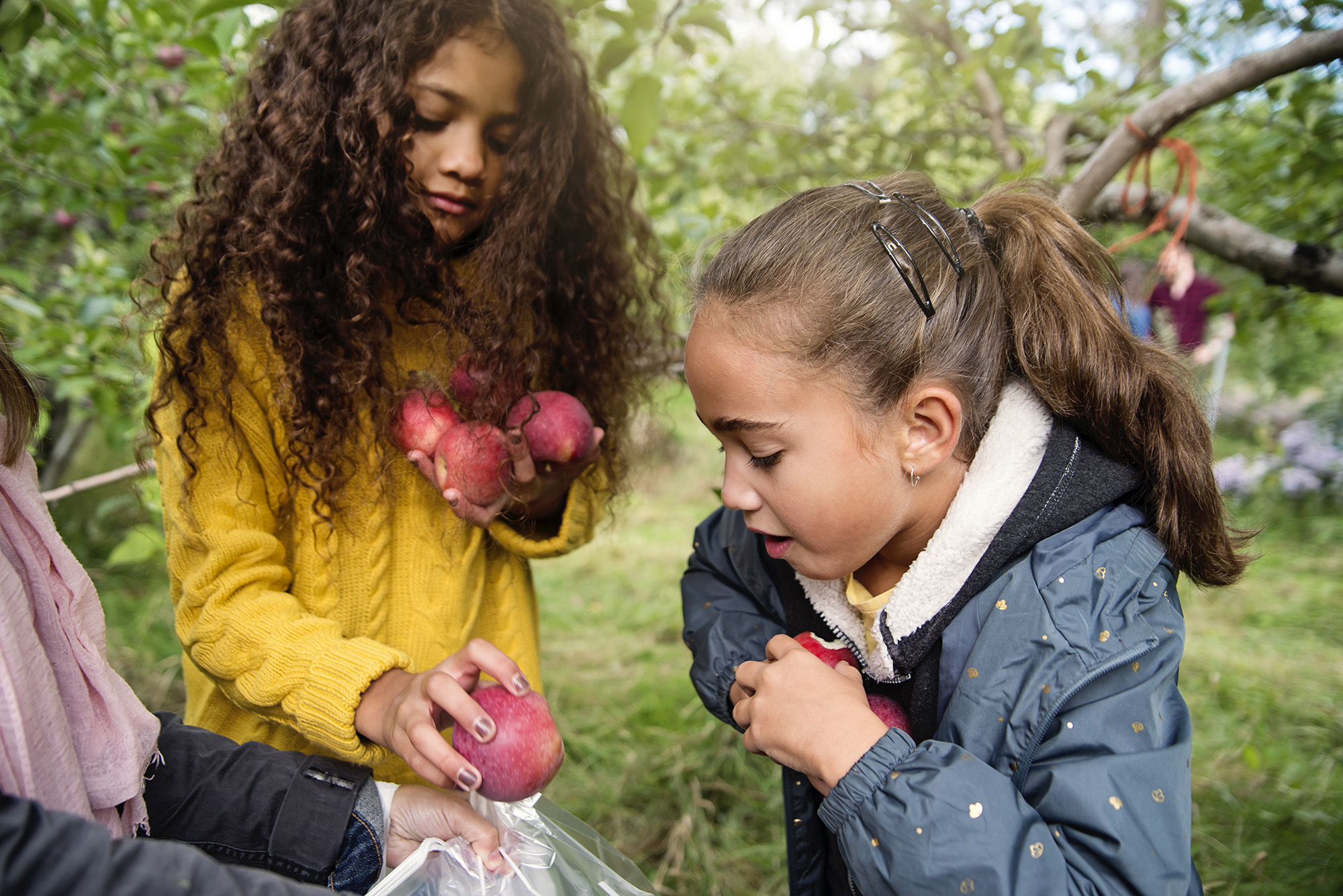 Two girls pick apples at apple orchard