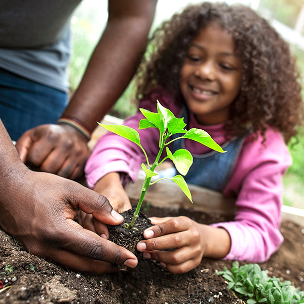 Father and daughter plant a vegetable garden