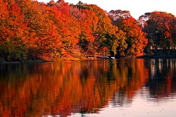 FallFoliage_250px.jpg